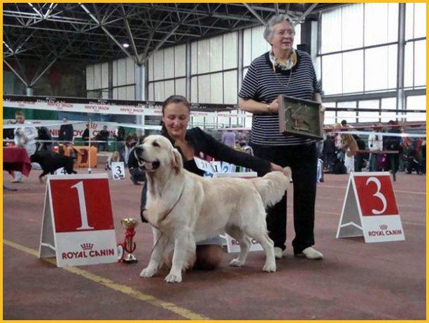 ACANA Sport and Agility Heritage Dog | DogOnline